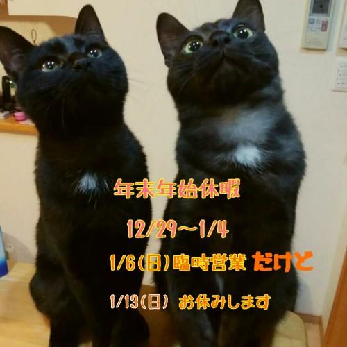 18-11-10-18-01-33-318_deco